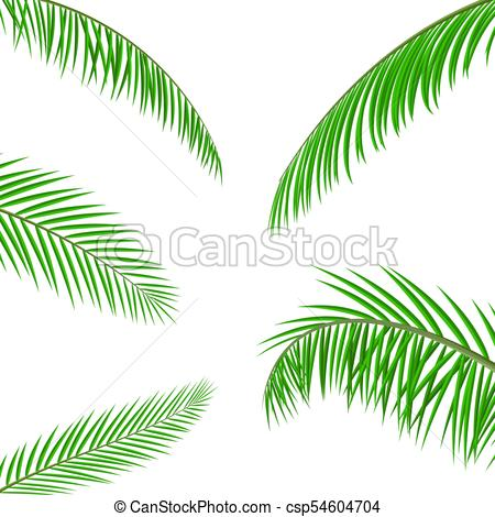 450x470 Tropical Green Leaves. Jungle Leaves. Coconut Palm, Vector