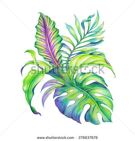 450x470 Abstract Exotic Jungle Foliage, Assorted Tropical Leaves