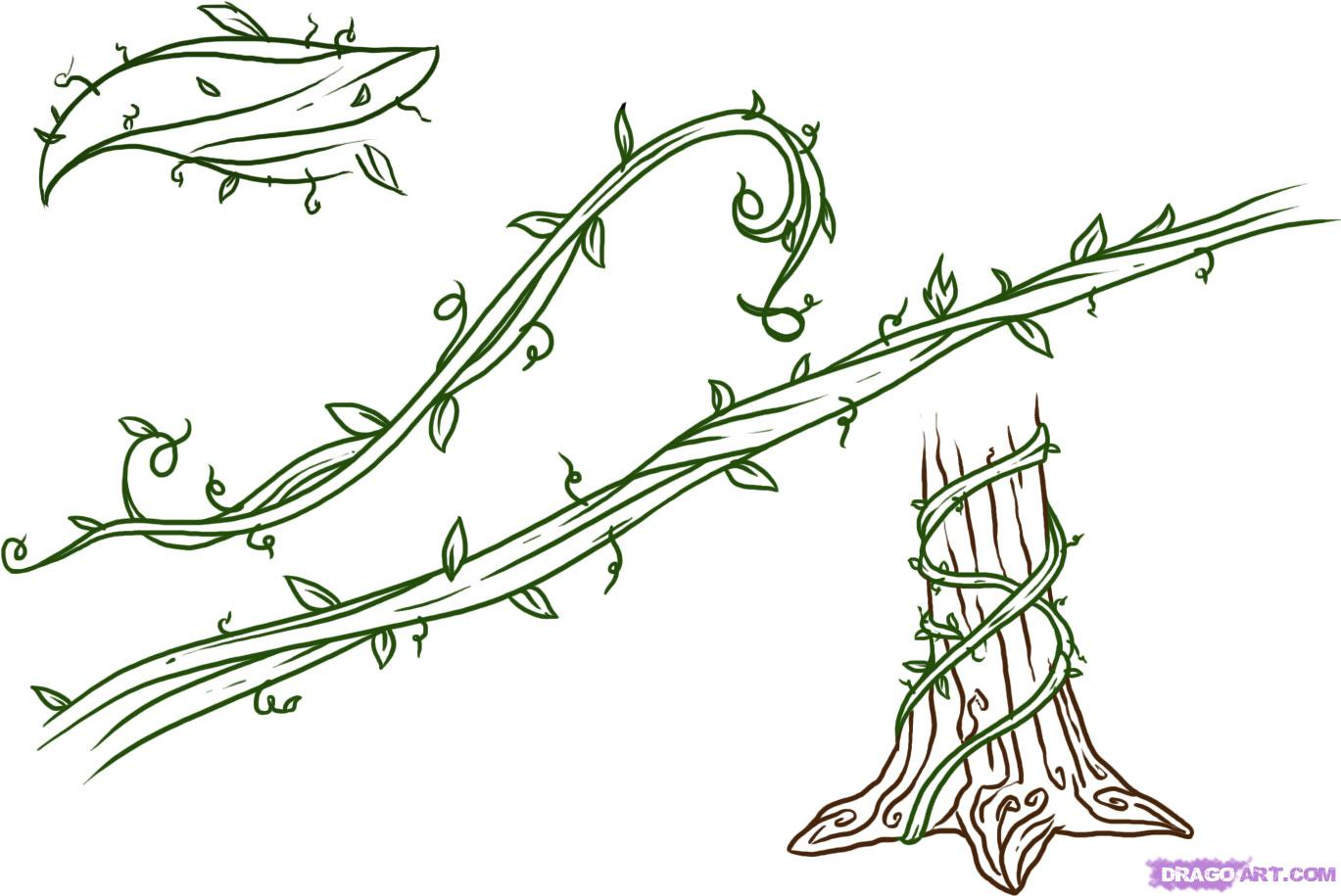 1369x915 Drawings Of Flowers Leaves And Vines To Draw Vines, Step By Step
