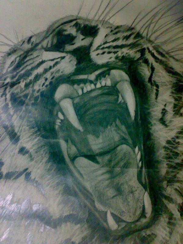 600x800 Ferrocious Feline Tiger Claw Lion Animal Drawing Forest