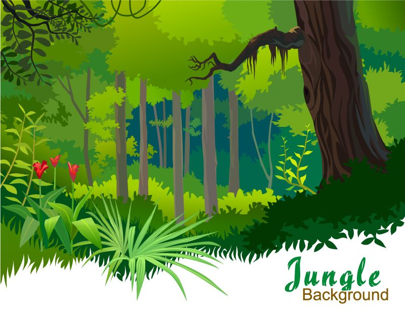 800x619 Cartoon Tropical Forest Vector Material Drawing Things