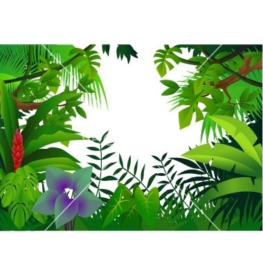 380x400 Tropical Rainforest Animals Drawing Tropical Rain Forest Vector
