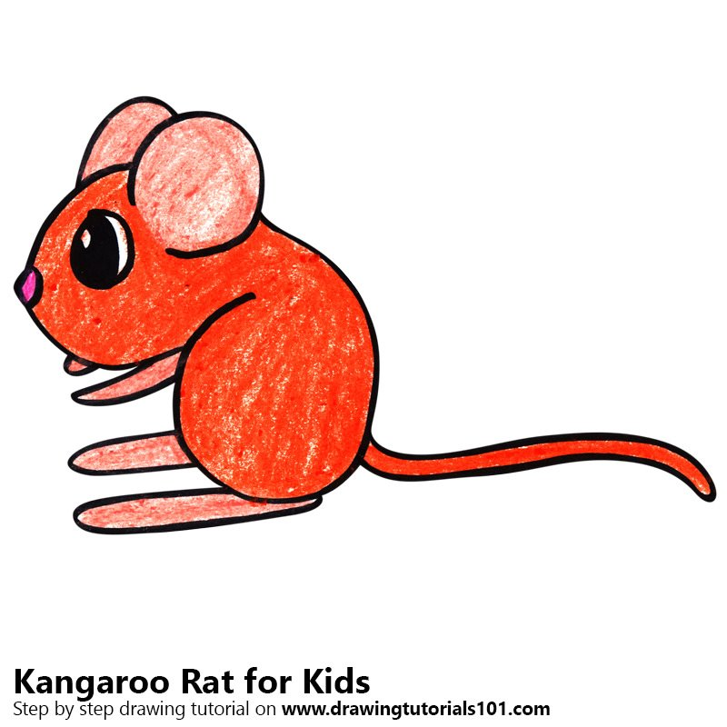 800x800 Learn How To Draw A Kangaroo Rat For Kids (Animals For Kids) Step