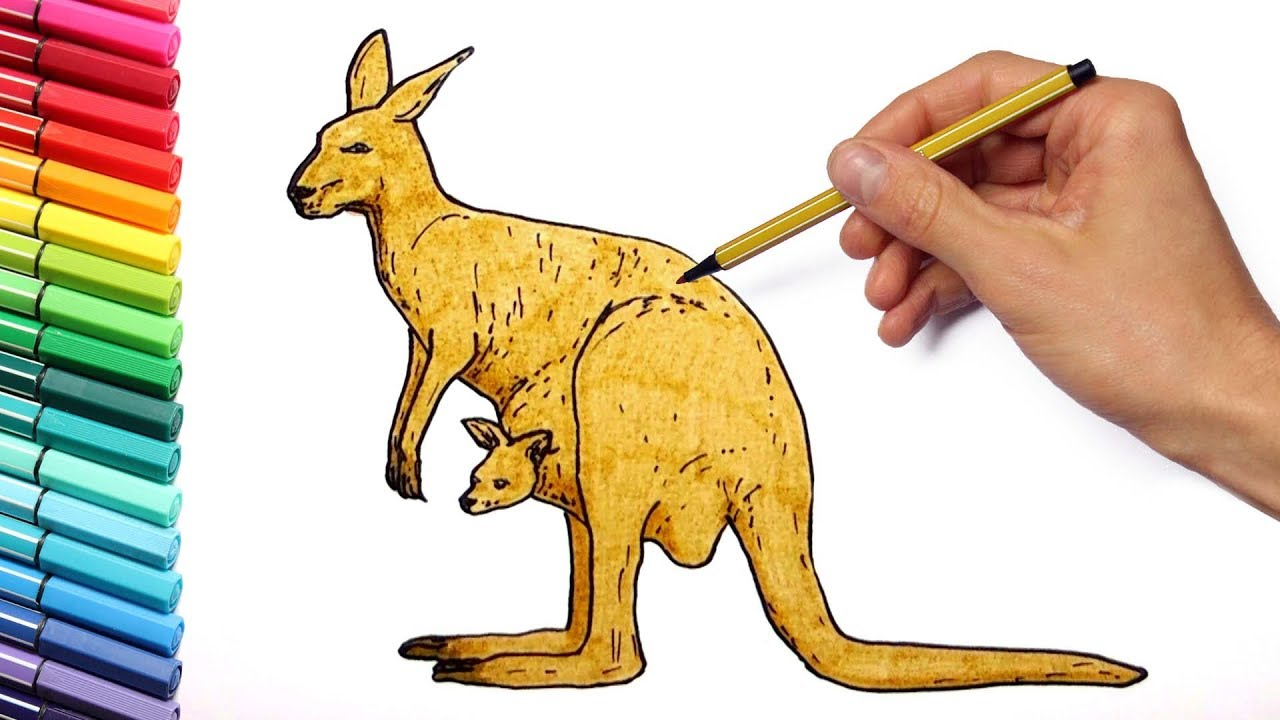 1280x720 Drawing And Kangaroo Wild Animals From Australia Learning Colors