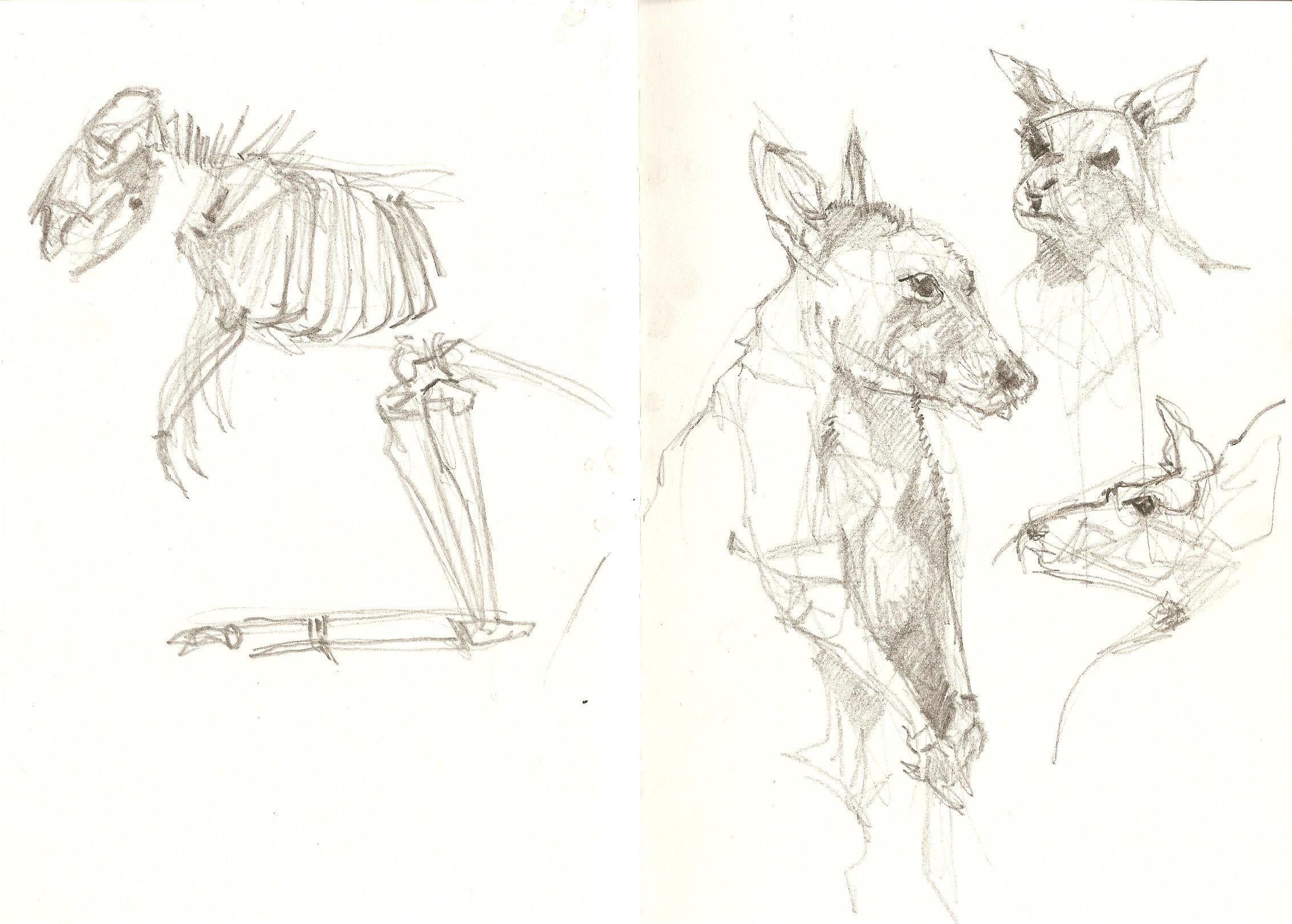 Kangaroo Sketch Drawing at GetDrawings.com | Free for personal use ...