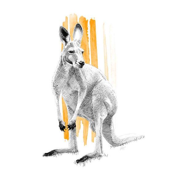 570x570 Skippy The Kangaroo Illustration, Fine Art Print, Drawing, Sketch