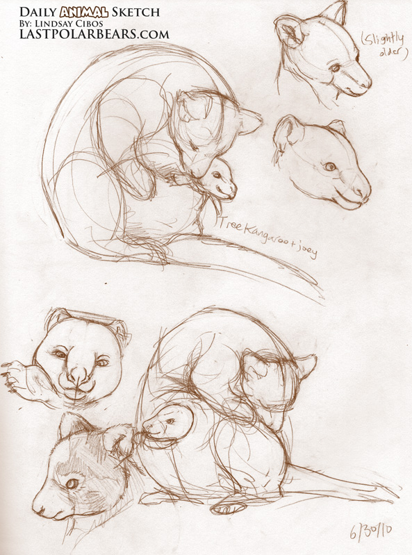 593x799 Tree Kangaroo And Joey How To Draw Animals And Creature