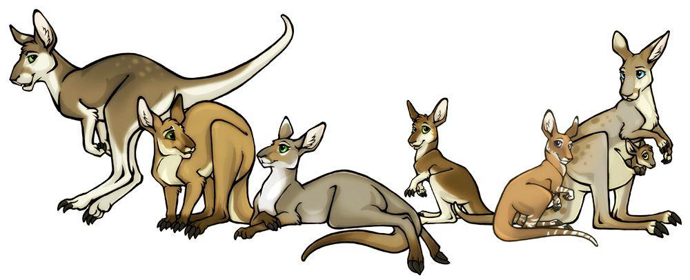 1000x406 Australis Plains Kangaroos By Lyosha On Pflegekinder
