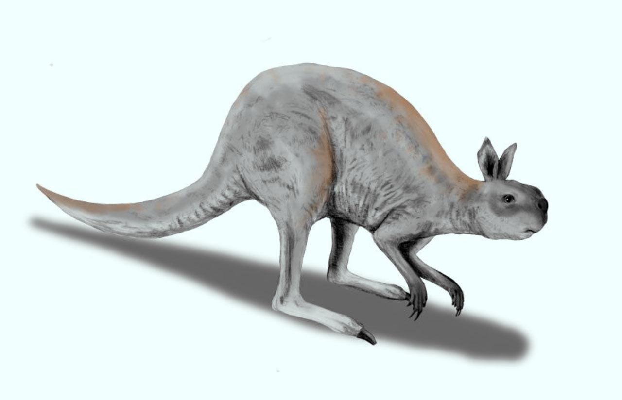 1280x824 Extinct Giant Kangaroos Walked Instead Of Hopped Paleontology