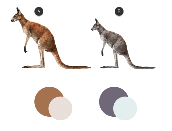 600x456 How To Draw Animals Kangaroos And Koalas