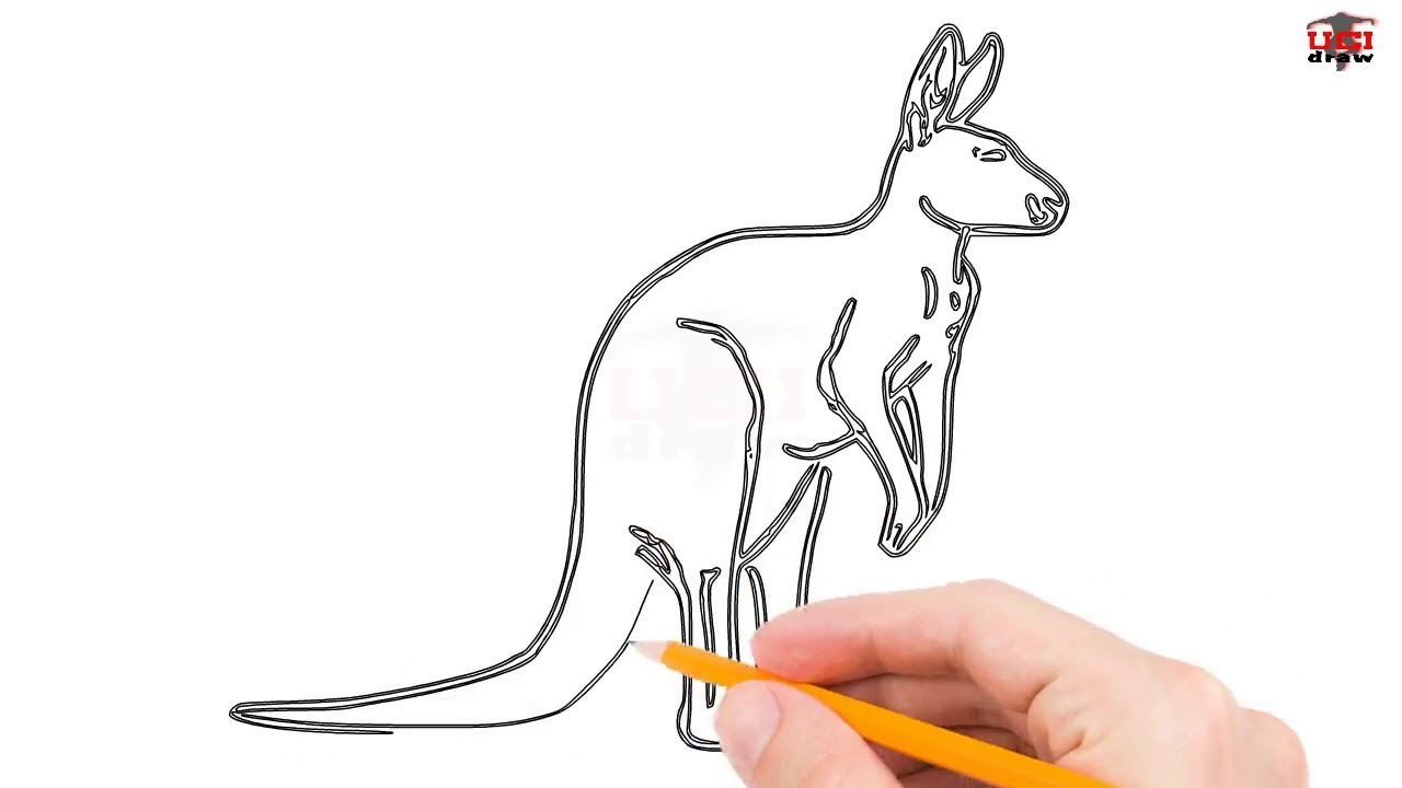 1280x720 How To Draw A Kangaroo Step By Step Easy For Beginnerskids