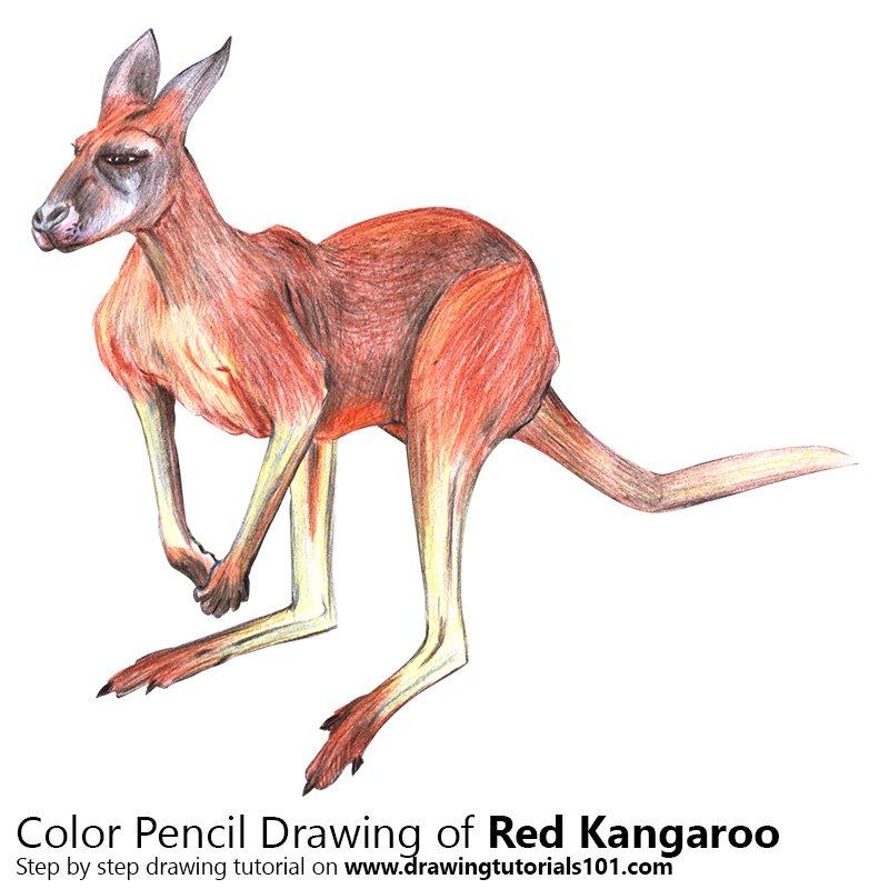 800x800 Red Kangaroo Colored Pencils