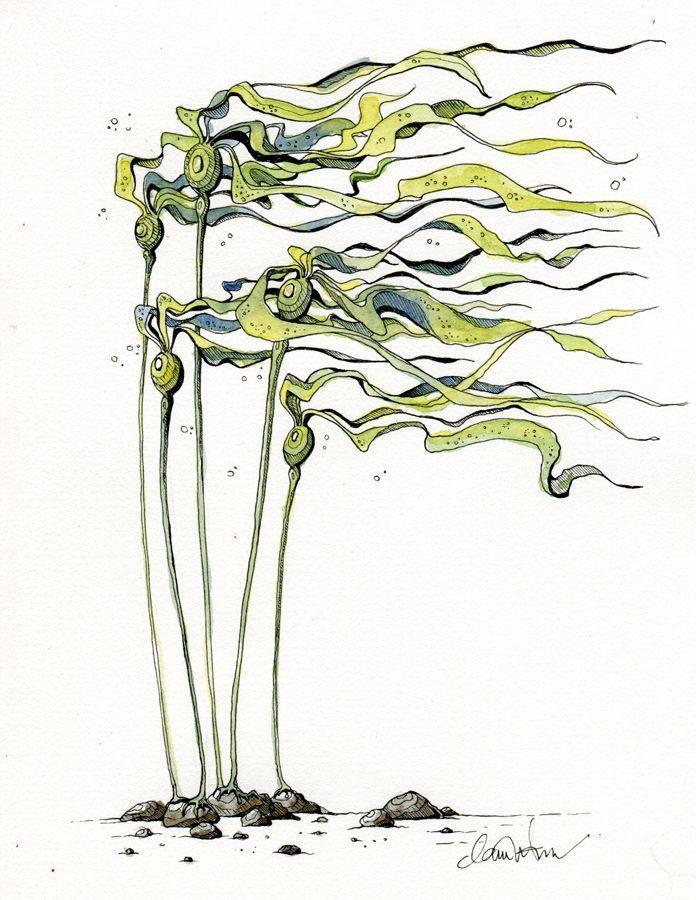 696x900 Bull Kelp By Claire Watson Kkelp Sea Art, Drawing