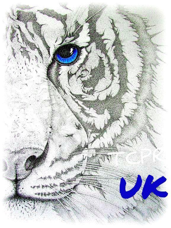 577x770 521 Best Kentucky Wildcats Images On Kentucky Wildcats