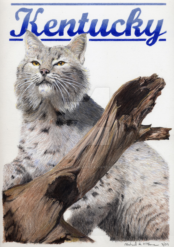 600x852 Kentucky Wildcat By Mclanesmemories