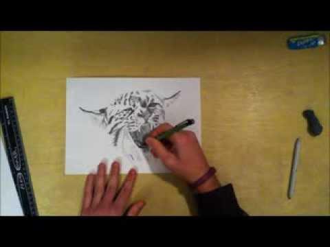480x360 Speed Drawing Of A Kentucky Wildcat