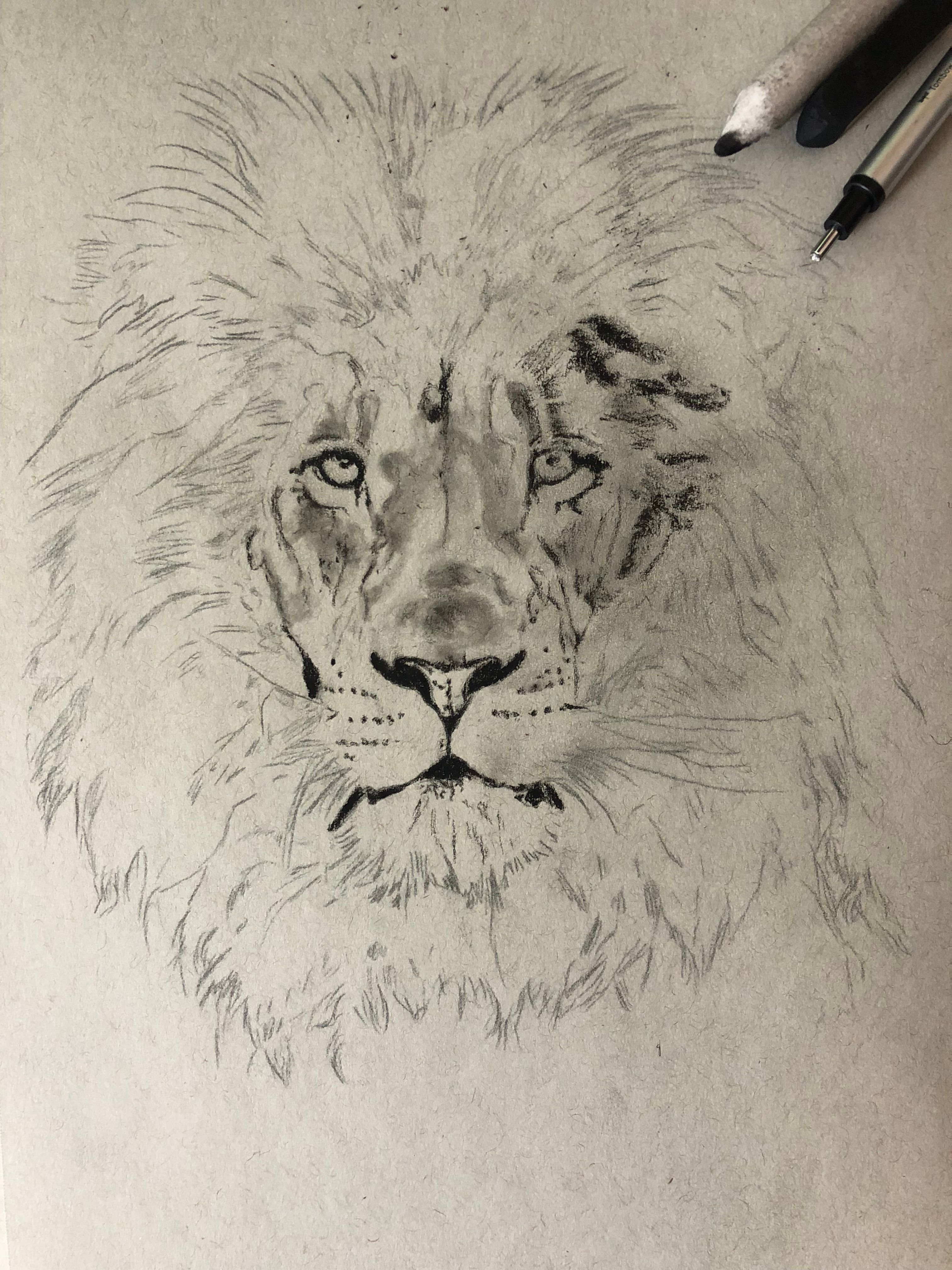 3024x4032 Drawing A Lion! Realistic Art With Charcoal Steemit