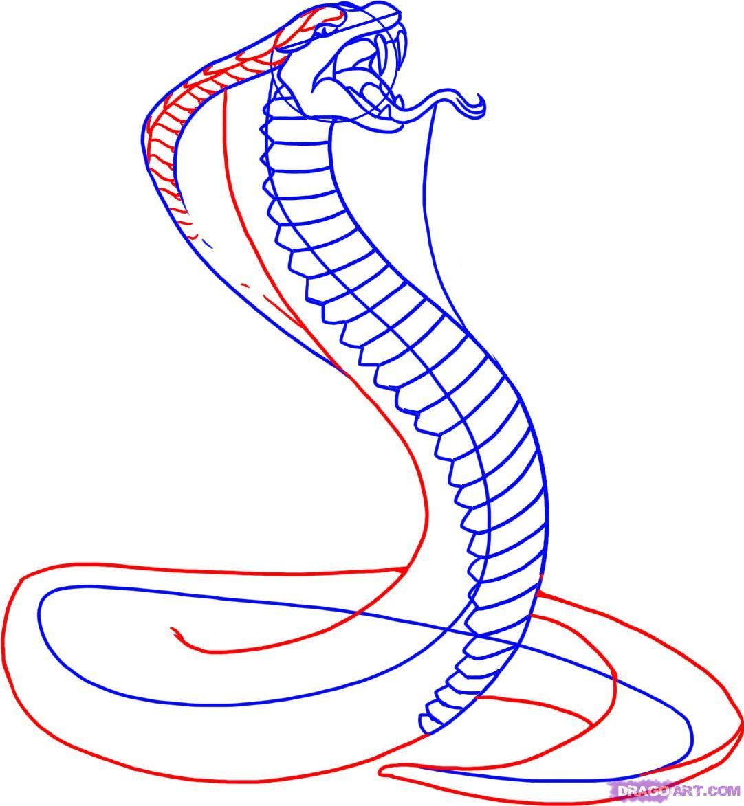 1082x1173 How To Draw A King Cobra Snake
