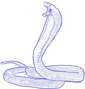 332x350 How To Draw A King Cobra Snake