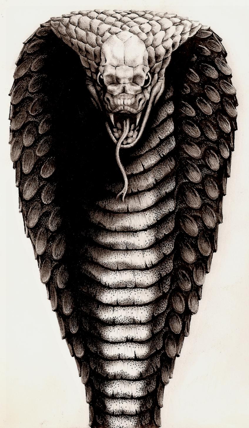 847x1458 King Cobra By Aka Maelstrom
