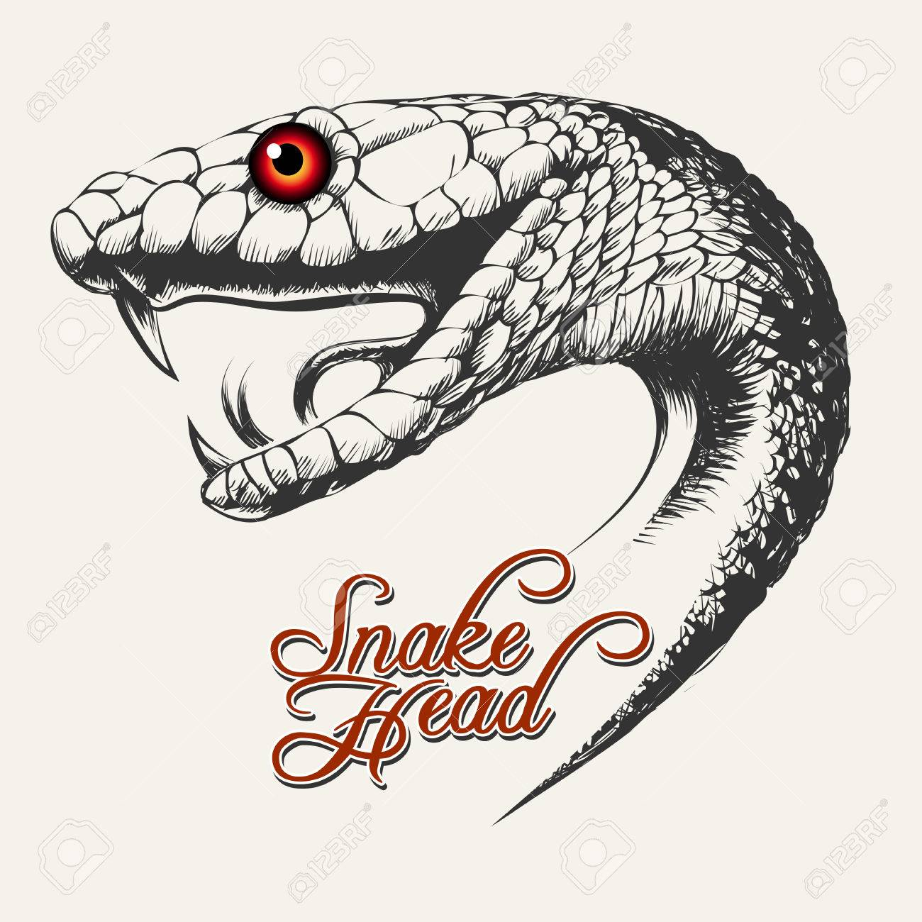 1300x1300 Snake Head Illustration Royalty Free Cliparts, Vectors, And Stock