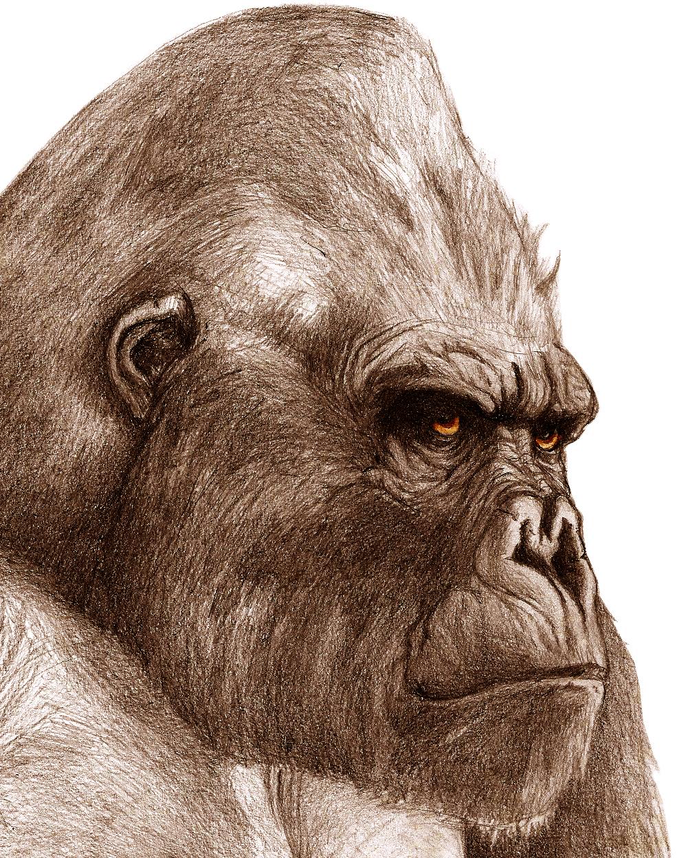991x1248 King Kong King Kong King Kong, Monkey And Animal