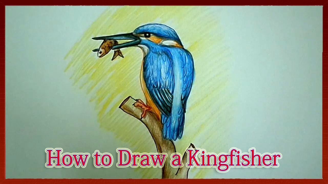 1280x720 How To Draw A Kingfisher Step By Step