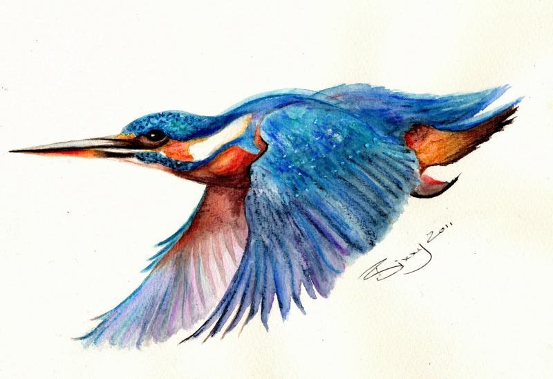 800x548 Kingfisher