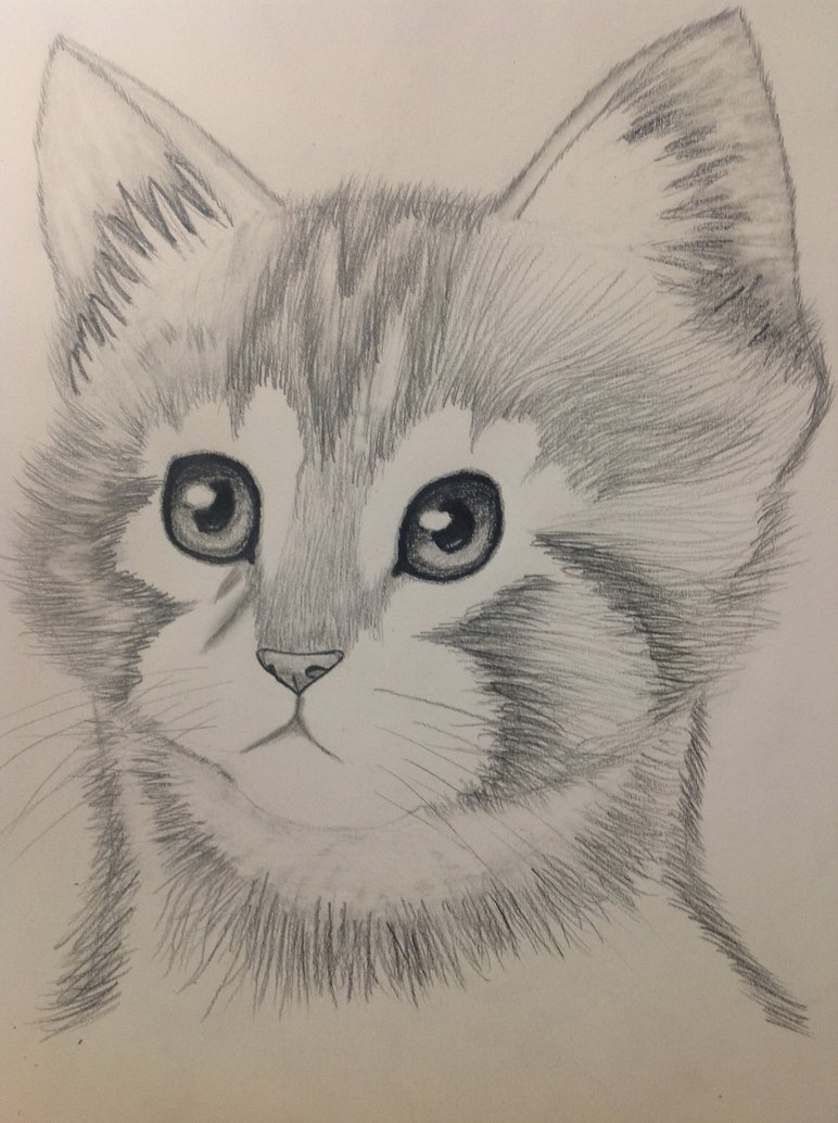 772x1034 Kitten Pencil Drawing By Bbbcomiclover1