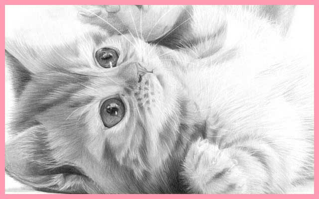 640x400 Puddy Cat Pencil Drawing, By Artist Sophie Lawson