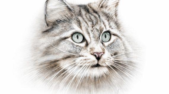 570x320 Pencil Drawing Of A Cat Drawing A Realistic Ba Kitten Cute Cat