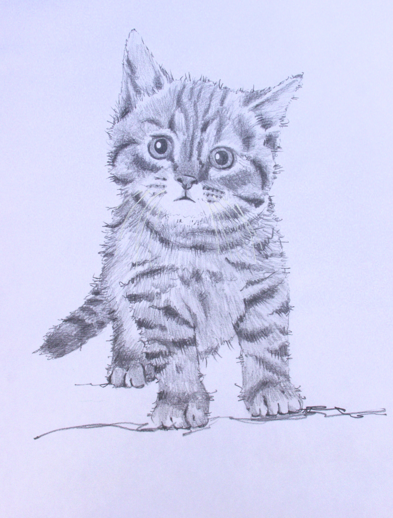 777x1024 Pencil Drawings Of Kittens Puddy Cat Pencil Drawing Kevsart