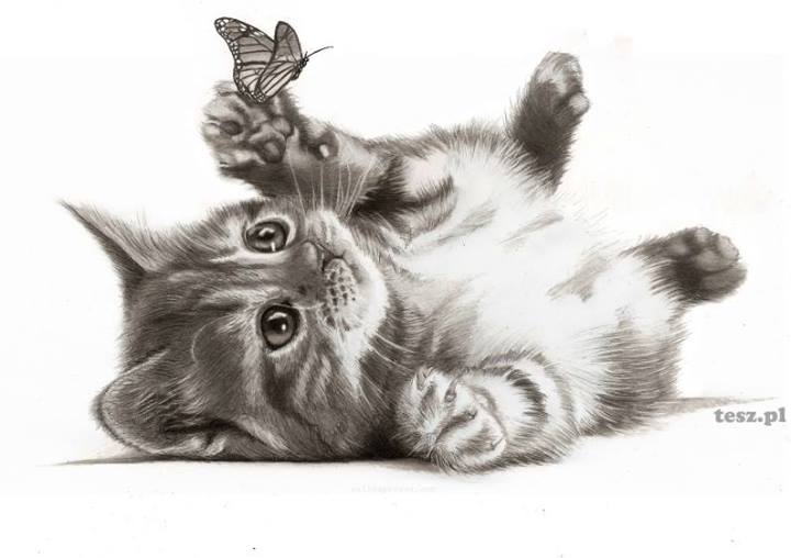 720x508 Pet Portraits On Craftsy Kitty, Butterfly And Drawings