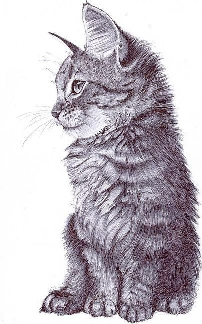 405x650 Zero To Hero Day 23 Challenge Cat, Cat Sketch And Cat Drawing