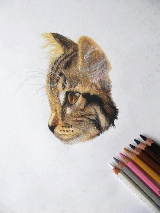 550x732 Drawing Colored Pencil Art Coloured Pencils, Cat
