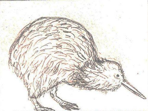 Kiwi Bird Drawing At Getdrawings Com Free For Personal Use Kiwi