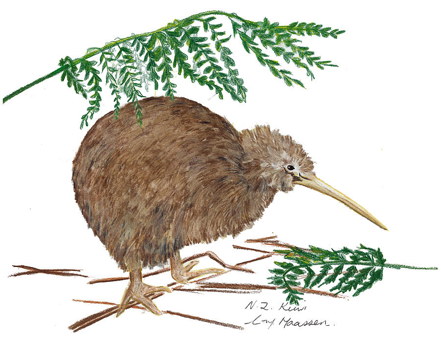 Kiwi Bird Drawing at GetDrawings.com | Free for personal use Kiwi ...