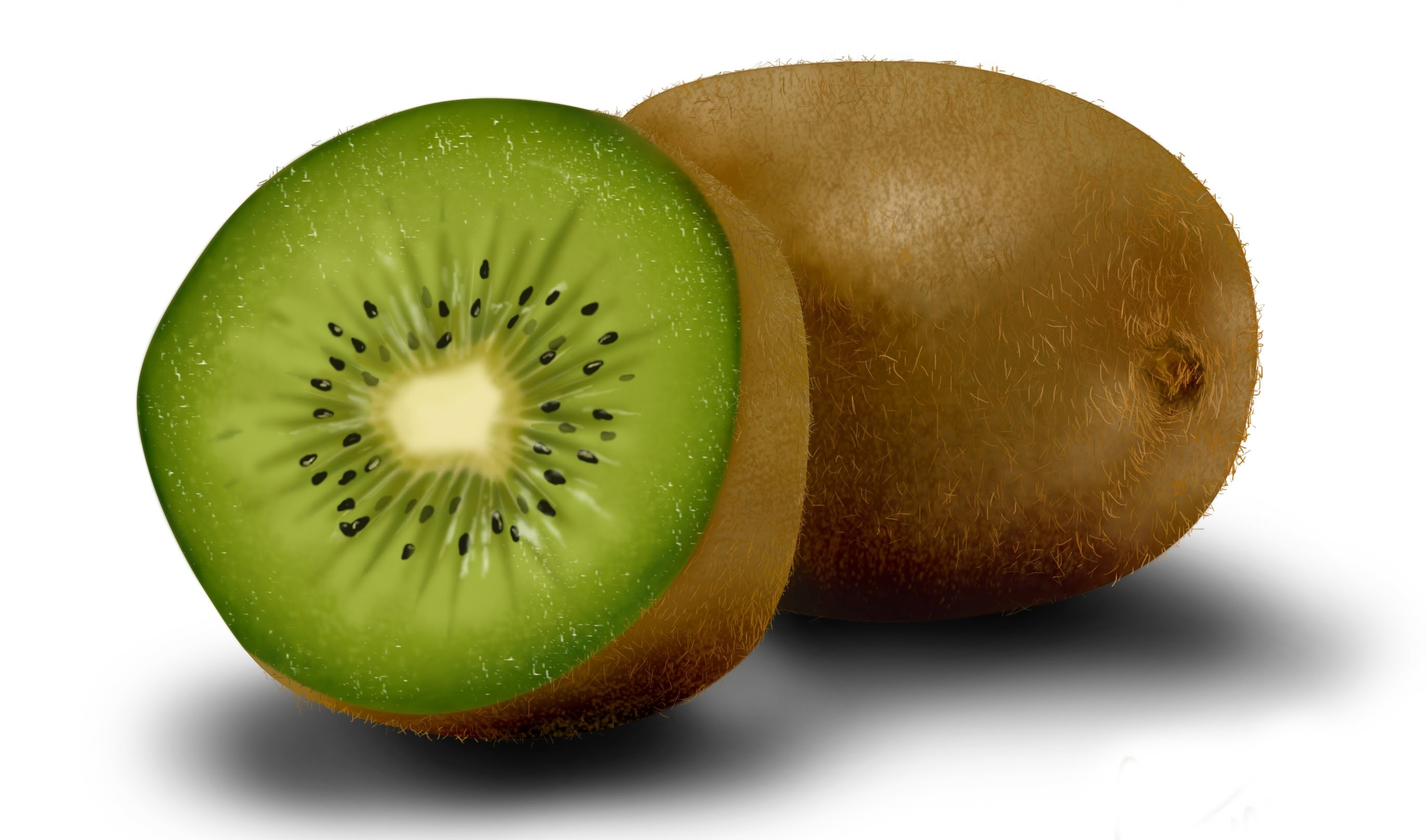 2745x1617 How To Draw The Realistic Kiwi Fruit