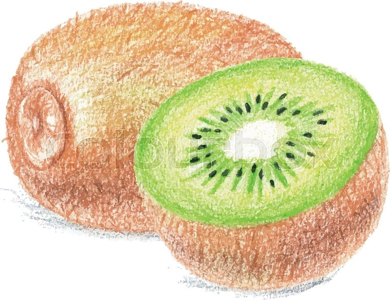 800x616 Kiwi Drawing By Color Pencils. Vector Illustration. Stock Vector
