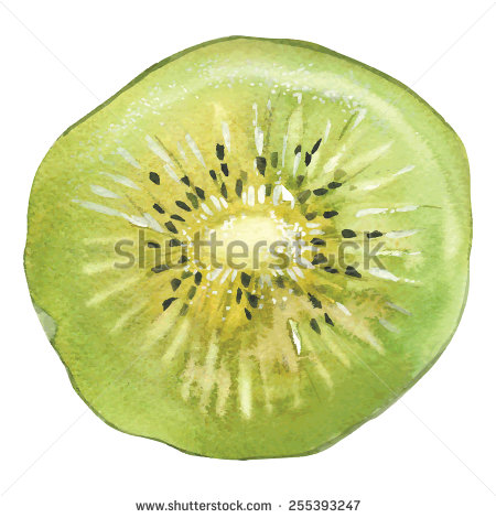 450x470 Slice Of Kiwi Drawing By Watercolor, Hand Drawn Vector
