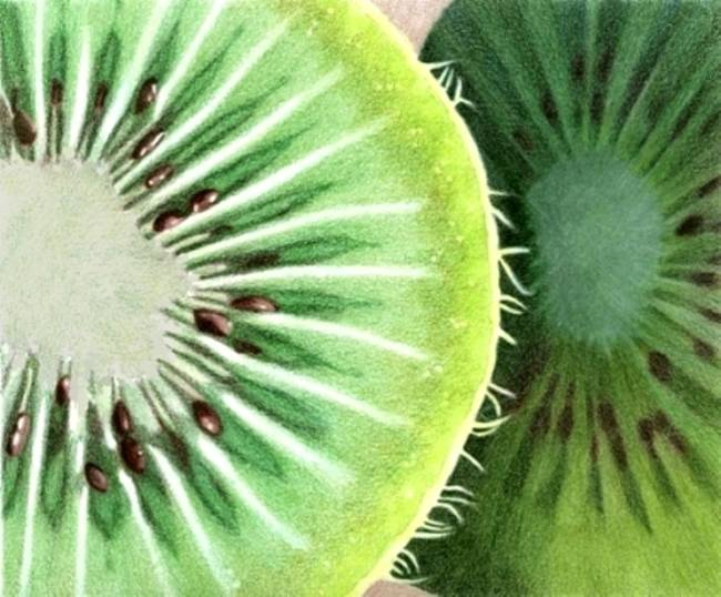 650x538 Stunning Kiwi Fruit Colored Pencil Drawings And Illustrations