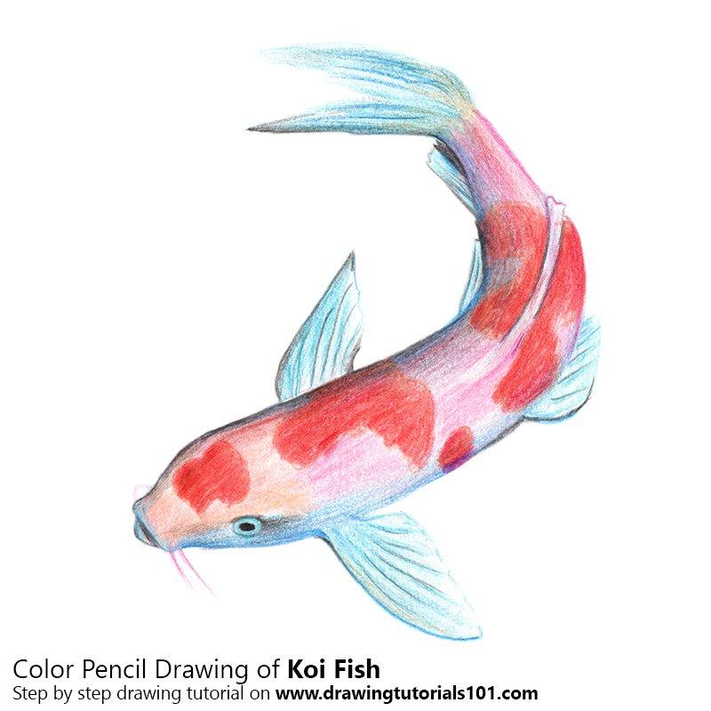 800x800 Koi Fish Colored Pencils