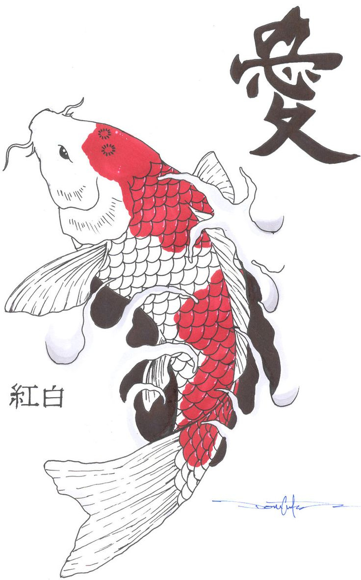 736x1183 Pictures Of Koi Fish Drawings