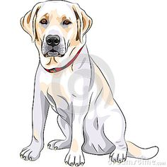 236x236 A632061680 Anticipation Yellow Lab Dog Drawing By Karen Olsen