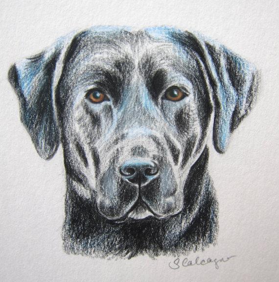 570x576 Black Lab Dog Drawing Lab Lover Gift Labrador By Clarityartdesign