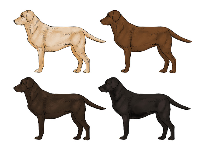 700x504 How To Draw A Dog Details Make The Difference