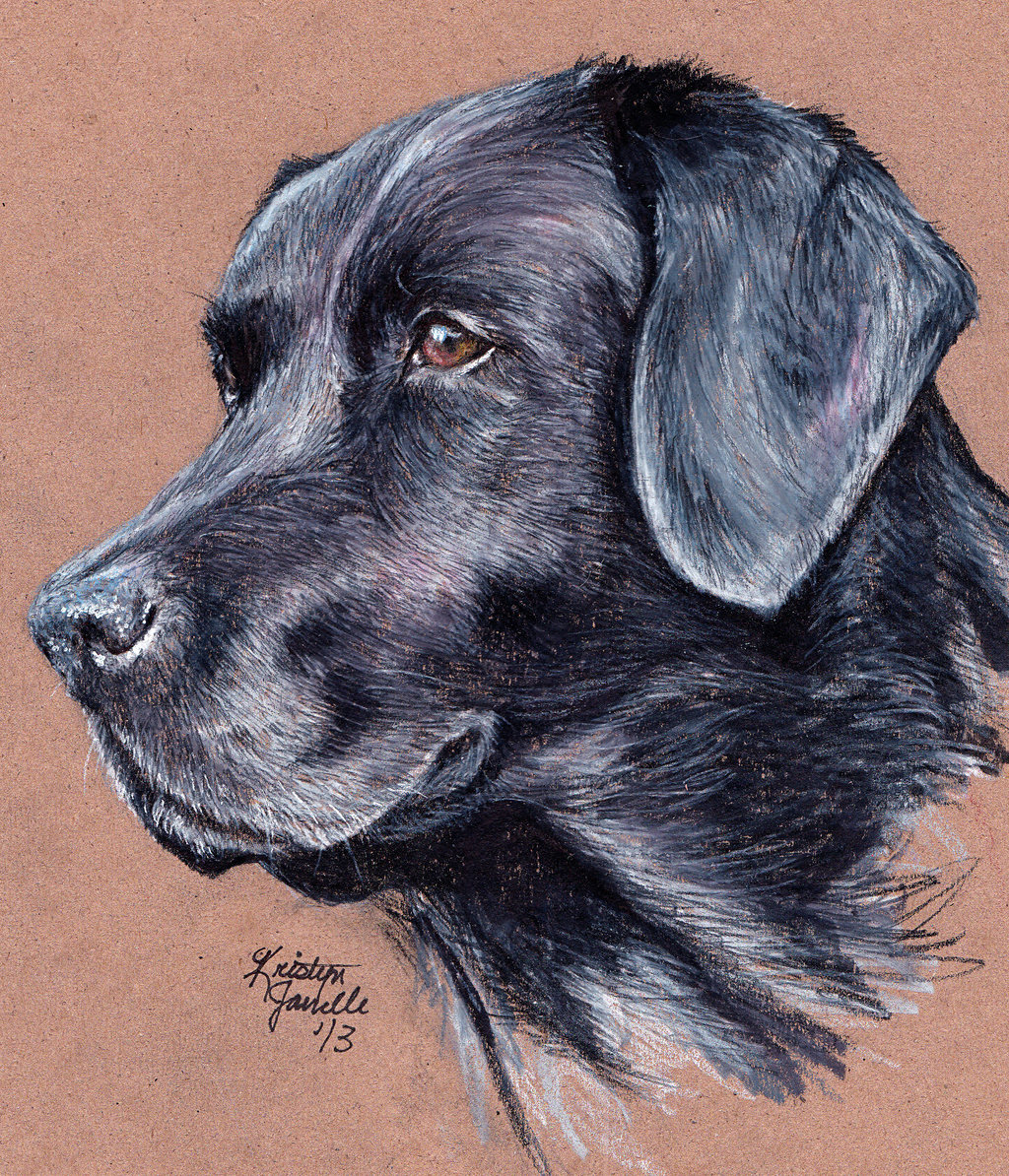 1024x1194 Pics For Gt Easy Black Lab Drawing Art Inspirations