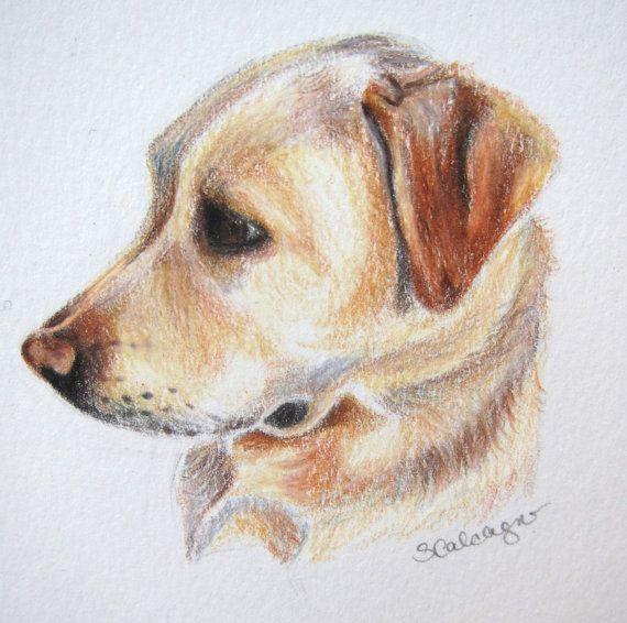 570x566 Yellow Lab Dog Drawing, Labrador Art, Original Drawing, Colored