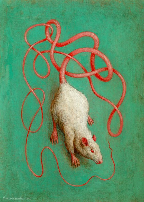 560x786 713 Best Rats Images On Rats, Computer Mouse And Draw