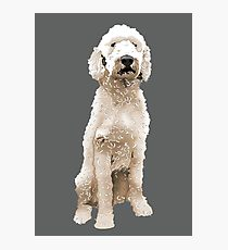 210x230 Labradoodle Drawing Photographic Prints Redbubble